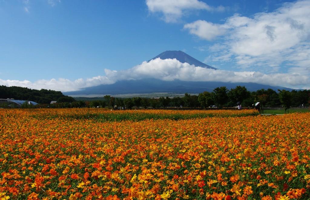 花の都公園 オレンジフレアー